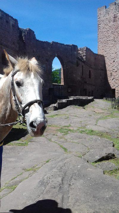 L'Alsace, c'est aussi : Tourisme équestre
